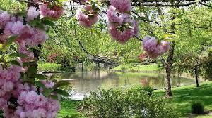 beautiful spring garden hd desktop wallpaper widescreen high