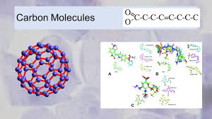 cells macromolecules ppt download