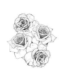 illustration inked roses hippy pencil