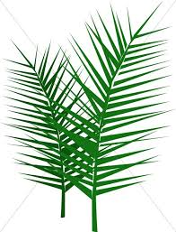 palm fronds for palm sunday leafy palm branches palm sunday clipart