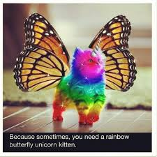 Happy Kitten Meme - rainbow unicorn kitten meme google search kittens pinterest