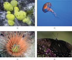 features used to classify animals biology
