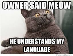 Crazy Cat Memes - 7 signs you re a crazy cat lady