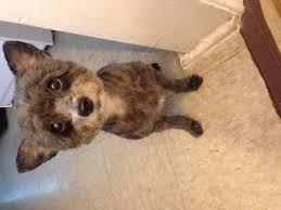 affenpinscher a donner lost dogs in port huron mi lost my doggie