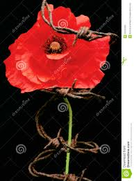 remembrance day poppy metaphor stock photos image 33150293