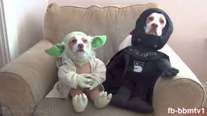 star wars dog halloween costumes cats and dogs in costume jamaican style rawpa crawpa youtube