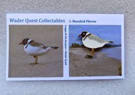 wader quest wader quest will be at the falsterbo bird show this