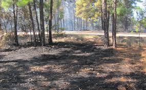 Colorado Wildfire Risk Assessment Portal by Texas A U0026m Agrilife