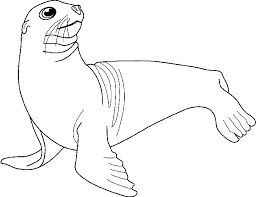 coloring pages sea lions coloring
