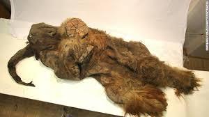 humans butchered mammoth 10 000 u2013 light