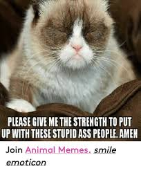 Stupid Animal Memes - 25 best memes about animals memes animals memes