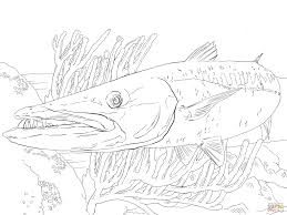fish coloring pages printable barracuda fish coloring page free printable coloring pages