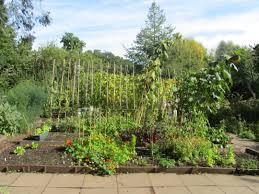 Vegetable Beds Lovebrum And Our Vegetable Beds U2013 Martineau Gardens