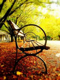Benches In Park - park benches imgur