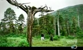 the mystery of the tree sasquatch chronicles
