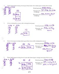 Dihybrid Crosses Worksheet Mrs Stein S 7th Period Sts Biology Whose Scribin Friday