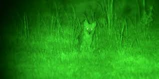 night hunting lights for scopes night vision vs thermal optics what you need to know