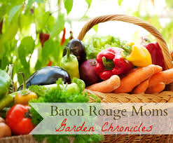 Homemade Pesticide For Vegetable Garden by Louisiana Gardening Archives Baton Rouge Moms