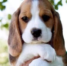 imagenes de animales whatsapp imagenes de animales para compartir en whatsapp gratis imagenes