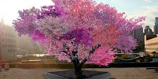 Judge A Tree By Its Fruit - this one tree grows 40 different types of fruit is probably from