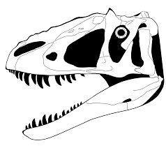 dinosaur skeleton head drawing clipartbay com
