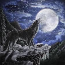 wolf u0027s solitude