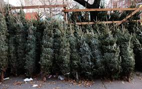 why your christmas tree may cost more this year wivb com