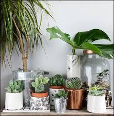 plante dans chambre plante d intérieur originale les bonnes idées plants cacti