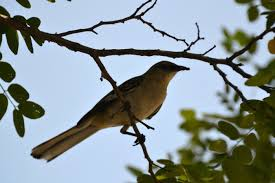file bird in a tree 5773345360 jpg wikimedia commons