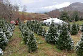 boyd mountain christmas tree farm
