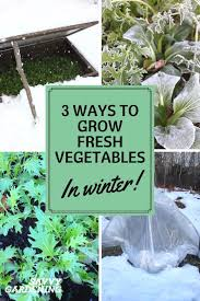 3 ways to grow fresh vegetables in winter cold frames mulch u0026 more