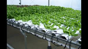 amazing simple hydroponics design system video youtube