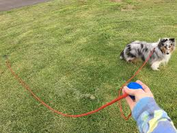 australian shepherd off leash retractable leashes can be dangerous could this be a safe