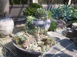 1725 best succulent and cactus garden images on pinterest