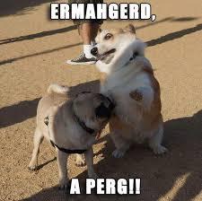 Ermahgerd Animal Memes - image result for ermahgerd animals funny animal memes pinterest
