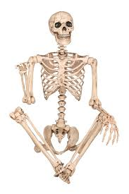 Halloween Skeleton Prop by Amazon Com Crazy Bonez Pose N Stay Skeleton Toys U0026 Games