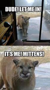 Funny Animals Memes - funny animal memes funny animal memes animal pictures with