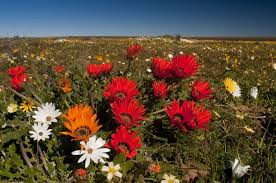 The Ultimate Guide To Spring by The Ultimate Guide To Spring Flower Season In South Africa