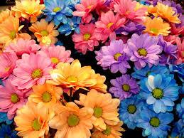 www flowers petals flowers image 3330 sendscraps