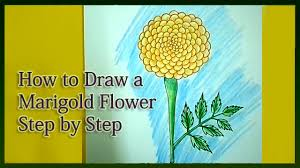 how to draw a marigold step by step youtube