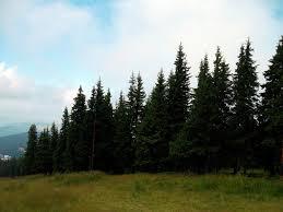 alpine trees 1 by cflo21 on deviantart