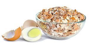 ground egg shells ground egg shells stock photo image 72489043
