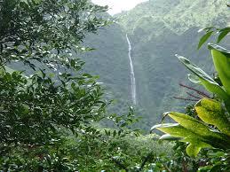 native plants in the tropical rainforest wilderness volunteers blog 2016