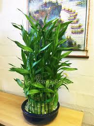 best indoor house plant bathroom design amazing best indoor plants for bathroom