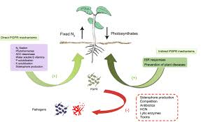 Plant Disease Journal - open access journals