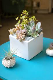 succulent arrangements small succulent arrangement https www pages dalla