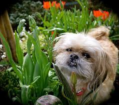 dog friendly portland oregon landscaping design ideas by