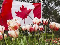 canada 150 blooming in richmond