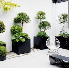 beautiful house plants beautiful indoor plants pictures so can you your apartment
