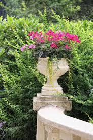 a pedestal planter filled with ivy geranium english ivy and